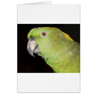 Yellownape Amazon Card