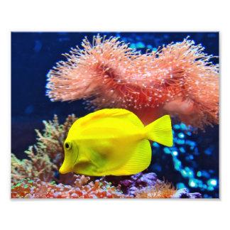 Yellownose Butterfly Fish Photo Print