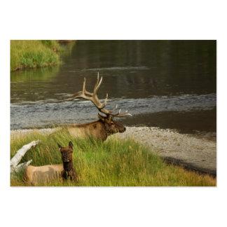 Yellowstone acopla la mini impresión tarjeta de visita