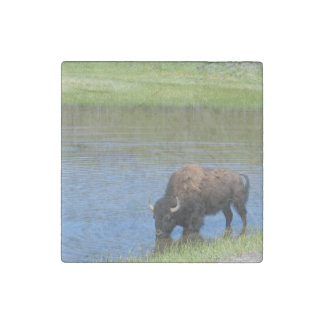 Yellowstone American Bison in Pond Stone Magnet