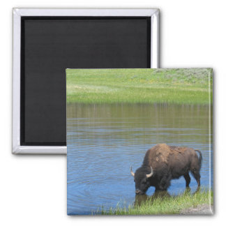 Yellowstone American Bison in Pond Refrigerator Magnet