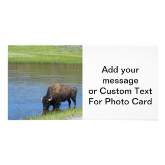 Yellowstone American Bison in Pond Photo Greeting Card