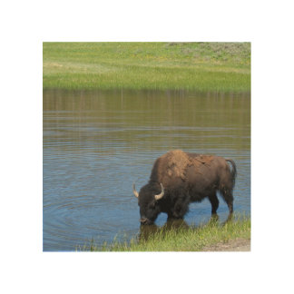 Yellowstone American Bison in Pond Wood Wall Decor