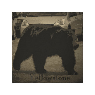 Yellowstone Bear Wrapped Canvas