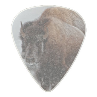Yellowstone Bison Acetal Guitar Pick