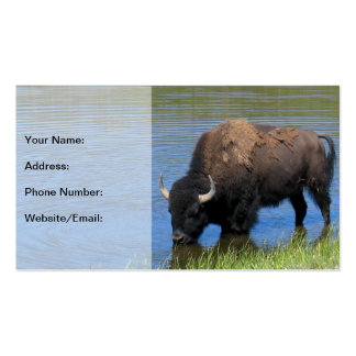 Yellowstone Bison Drinking in Lake Business Card Templates