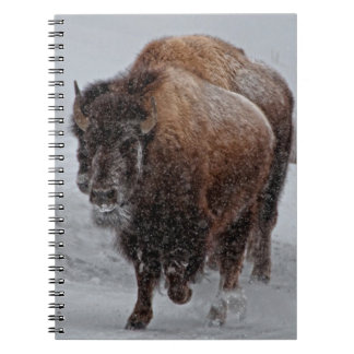 Yellowstone Bison Note Book