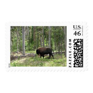 Yellowstone Bison Postage
