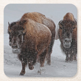 Yellowstone Bison Square Paper Coaster