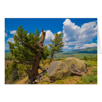 Yellowstone Boulder Greeting Card