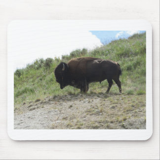 Yellowstone  Buffalo Picture -  Nature At It's Bes Mouse Pad