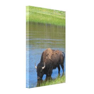 Yellowstone Buffalo Souvenir Canvas Print