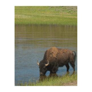 Yellowstone Buffalo Souvenir Wood Wall Art