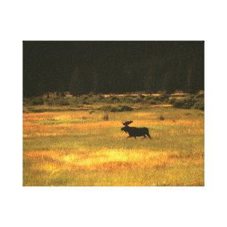 Yellowstone Bull Moose Wall Art Gallery Wrapped Canvas