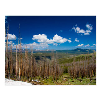 Yellowstone Burned Forest Postcard