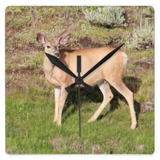 Yellowstone Deer in Velvet Square Wall Clock