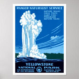 ~ Yellowstone del servicio del naturalista del gua Poster
