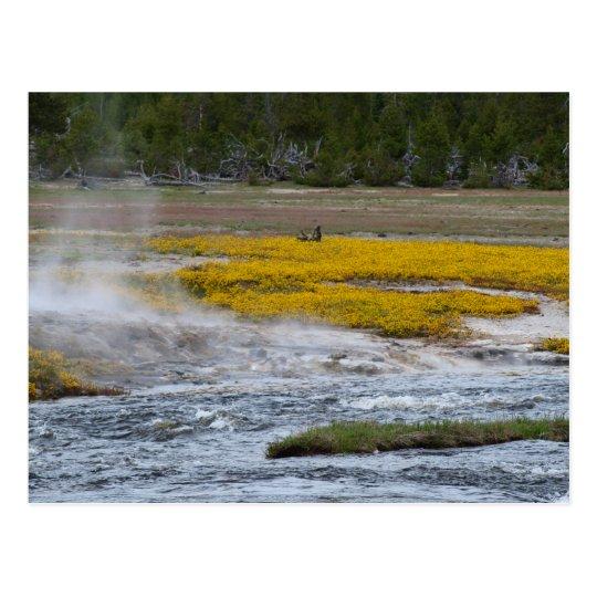Yellowstone Geysers and Wild Flowers Postcard