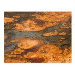 Yellowstone N.P. Algae Bloom Post Card