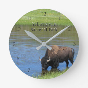 Yellowstone National Park Bison in Pond Round Clock