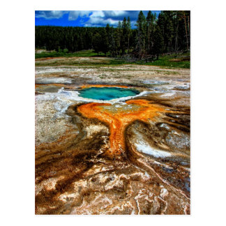 Yellowstone Thermal Pool Postcard