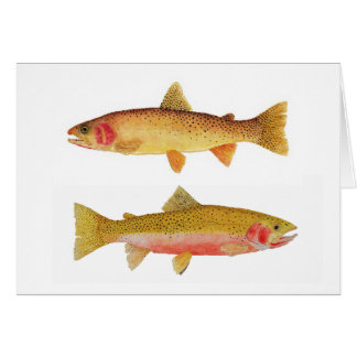 Yellowstone & Westslope Cutthroat Trout Card