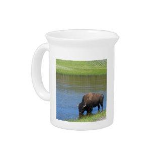 Yellowstone Wild Buffalo in Pond Beverage Pitcher