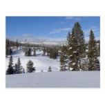 Yellowstone Winter Landscape Photo Postcard