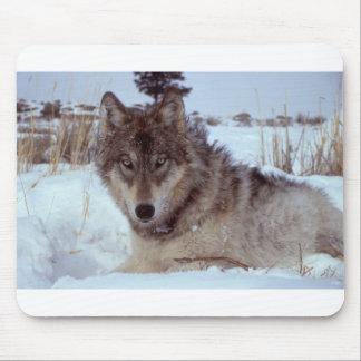 Yellowstone-wolf-17120 Mouse Pad