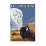 YellowstoneBison con fiel viejo Tarjeta Postal