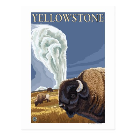 YellowstoneBison with Old Faithful Postcard