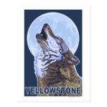 YellowstoneHowling Wolf Post Card