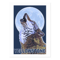 YellowstoneHowling Wolf Postcard