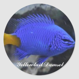 Yellowtail Damsel Collectible Stickers