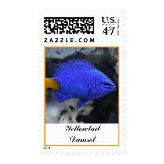 Yellowtail Damsel Postage Stamp