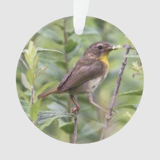Yellowthroat común