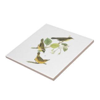Yellowthroat común por Audubon Azulejo Cuadrado Pequeño