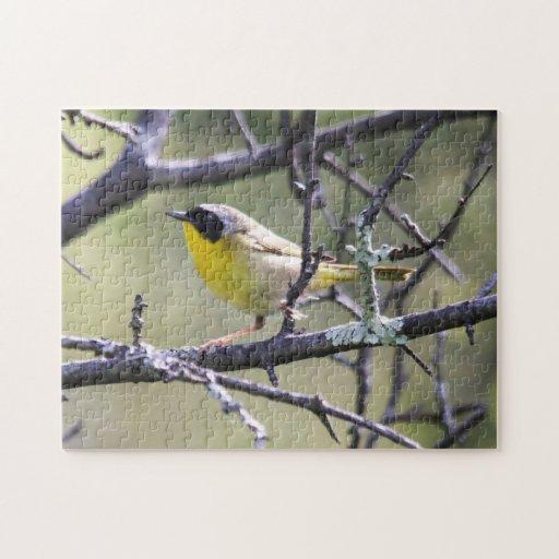 Yellowthroat común puzzle con fotos