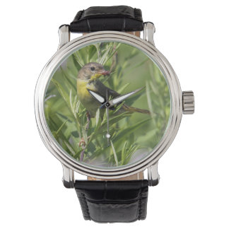 Yellowthroat común relojes