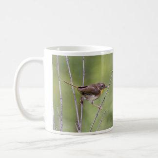 Yellowthroat común taza de café