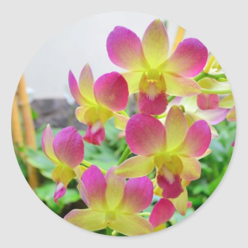 Yelow Pink Orchids Round Stickers