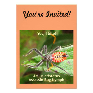 Yes I Bite Assassin Bug Announcement