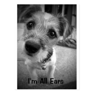 Yes Master, I'm All Ears Postcard