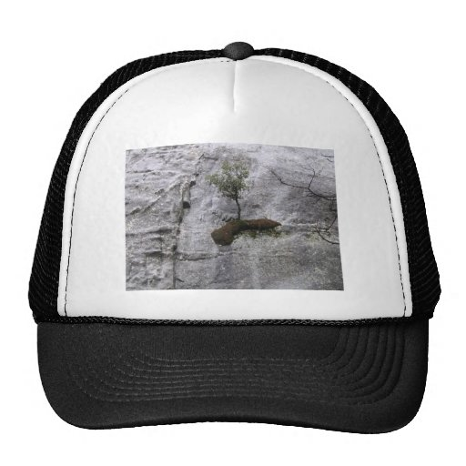 Yes you can mesh hat