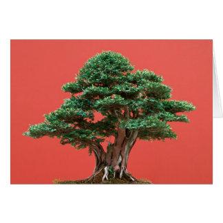 Yew bonsai card