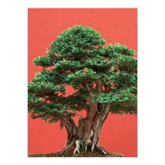 Yew bonsai custom invite
