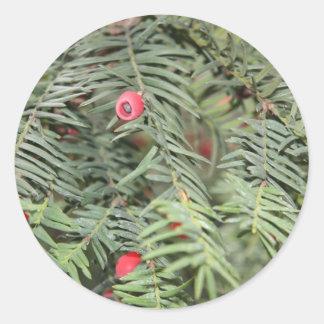 Yew tree, Milan, Italy Classic Round Sticker