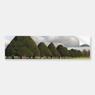 Yew Trees at Hampton Court, UK Car Bumper Sticker