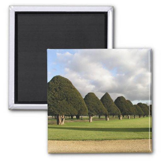 Yew Trees at Hampton Court, UK Refrigerator Magnets