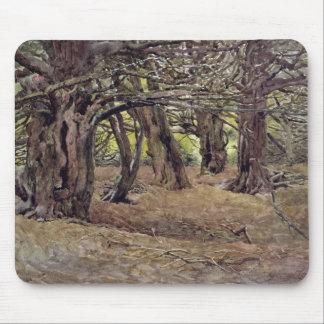 Yews in the Old Yew Wood Mouse Pad